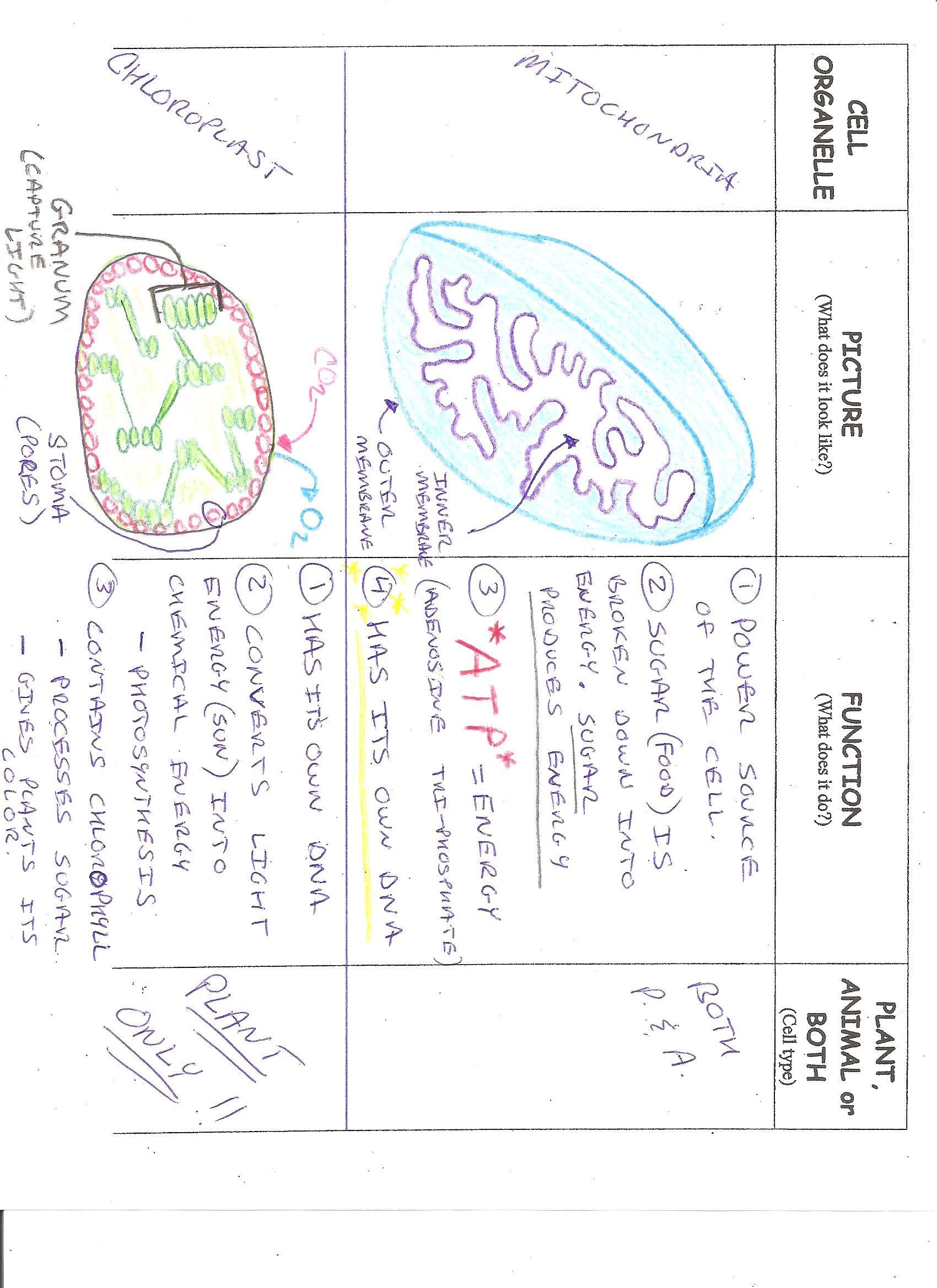 Classwork Assignments