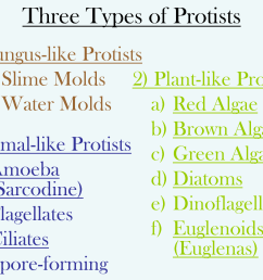 Types Of Protists Worksheets   Printable Worksheets and Activities for  Teachers [ 1125 x 1500 Pixel ]