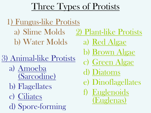 small resolution of Types Of Protists Worksheets   Printable Worksheets and Activities for  Teachers