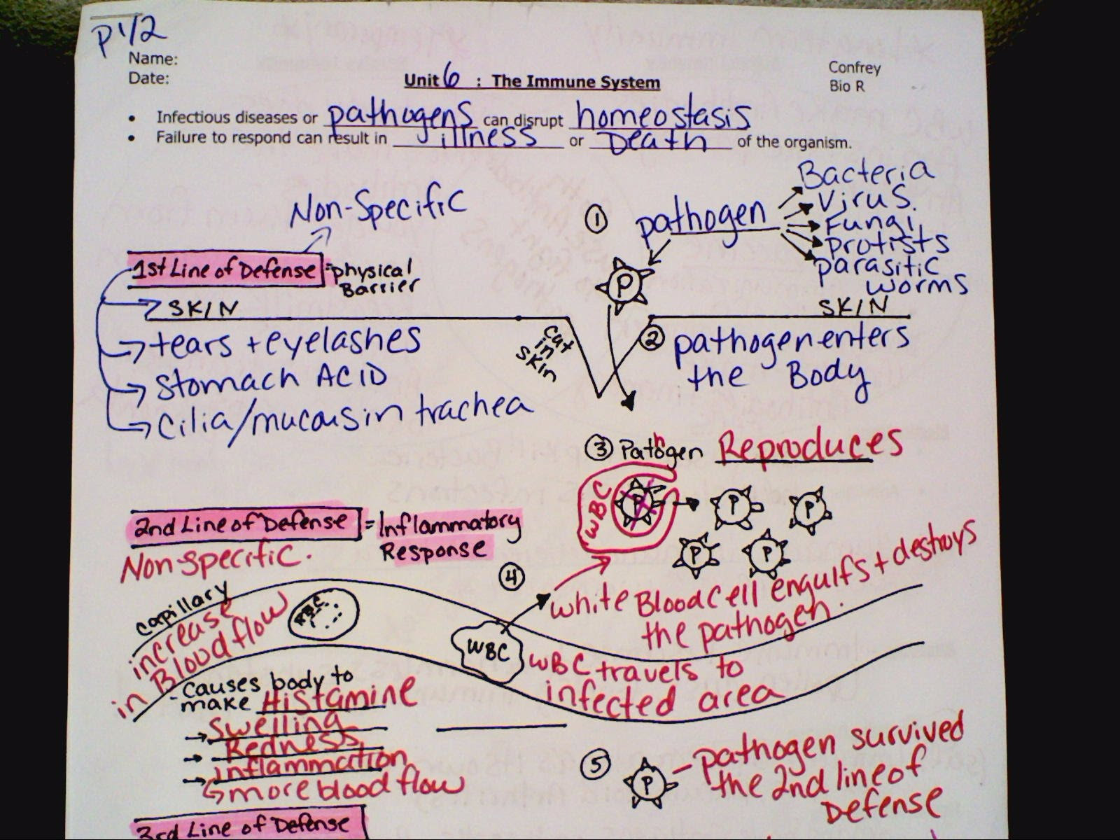 Immune System Notes Worksheet