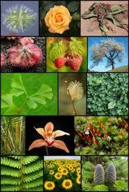 Kingdom Plantea : kingdom, plantea, Kingdom, Plantae, Kingdoms