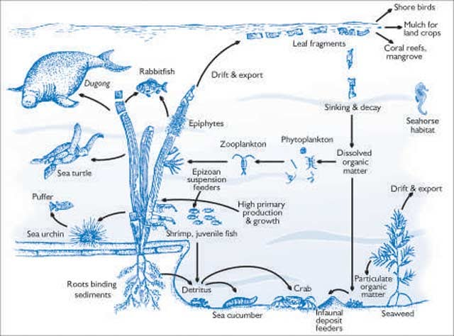 leatherback sea turtle food web diagram yamaha rhino wiring chain prady eat are jellies which is their favorite some times the leather back eats jellyfish but very rarely because aren t supposed to be