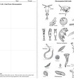 32 Pond Water Lab Worksheet - Worksheet Project List [ 2400 x 3126 Pixel ]