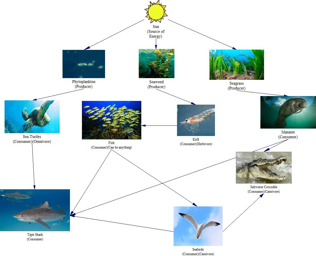 ocean food chain diagram block of wireless power transmission sand tiger shark web