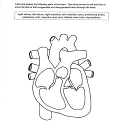 Circulatory System Heart Diagram Worksheet Single Phase To 3 Motor Wiring Medical Detectives
