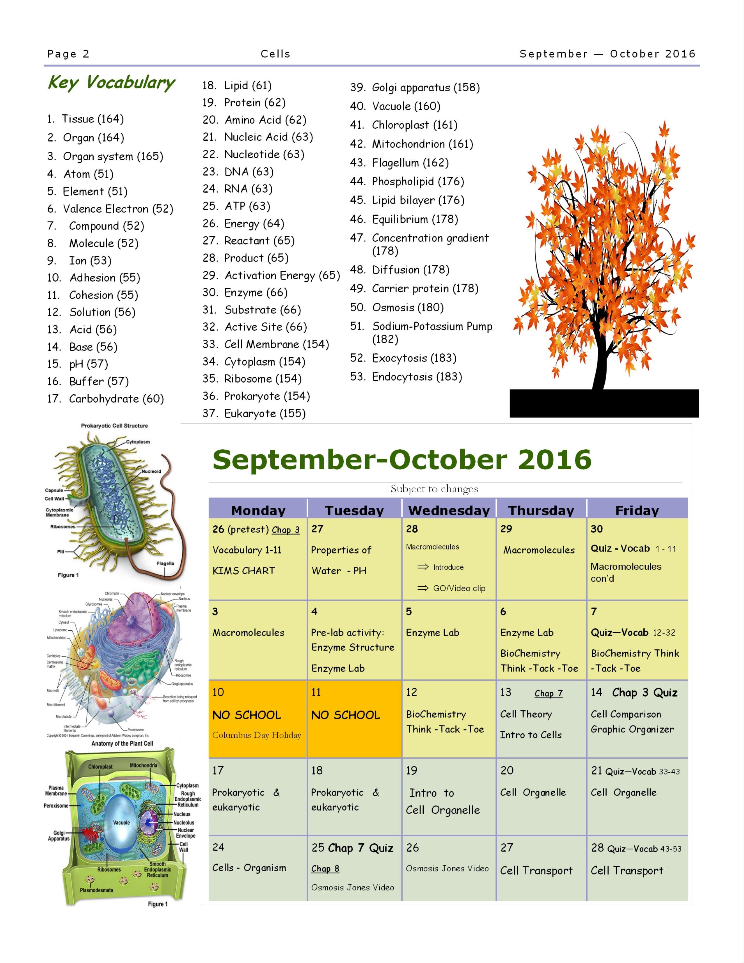 Cells Unit Study Guides