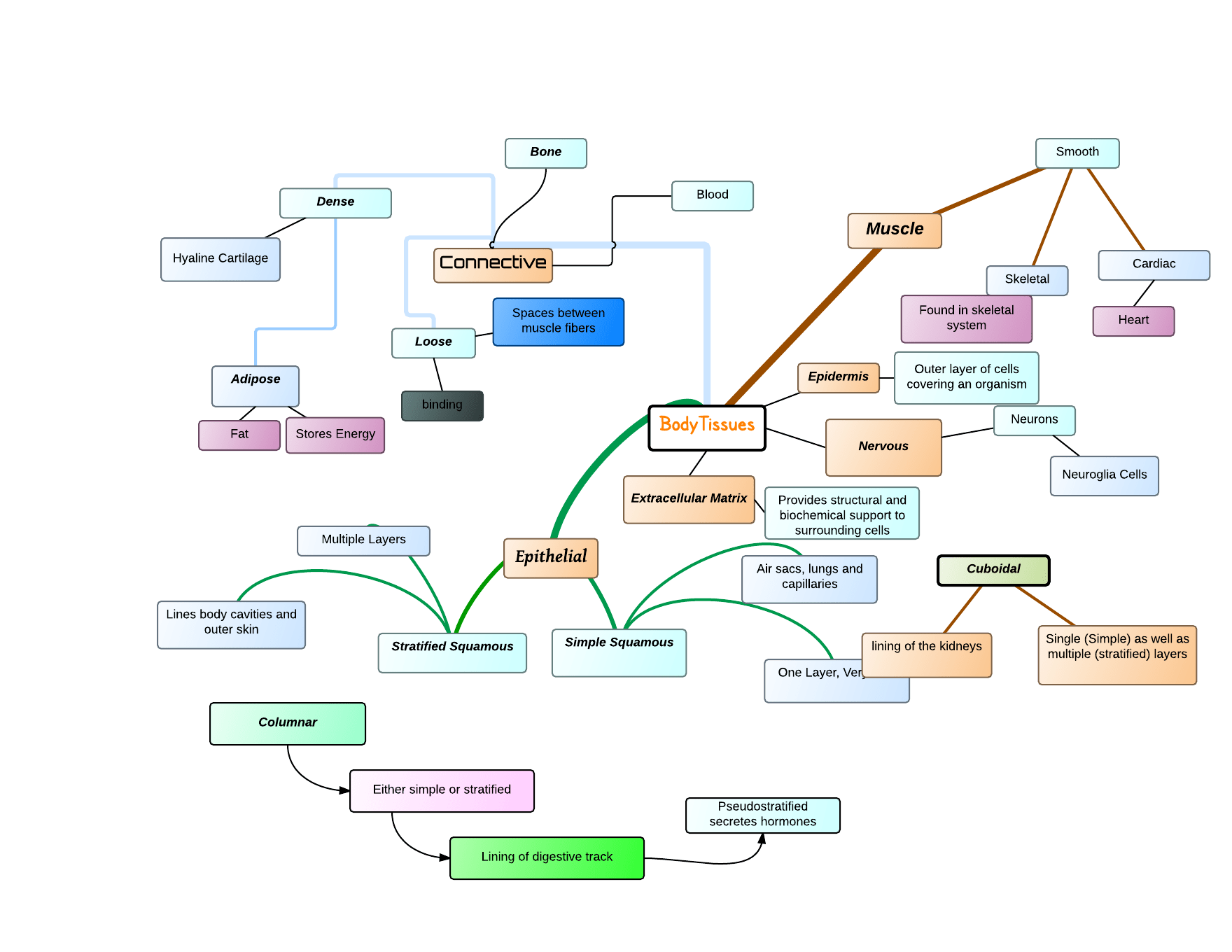 Body Tissues Concept Map