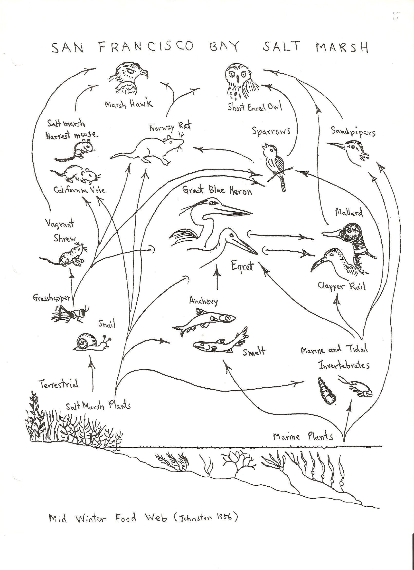 Printables. Create A Food Web Worksheet. Mywcct Thousands