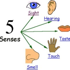 Logical Data Model Example Diagram Parts Of The Outer Ear Five Senses - Anglès C.s.