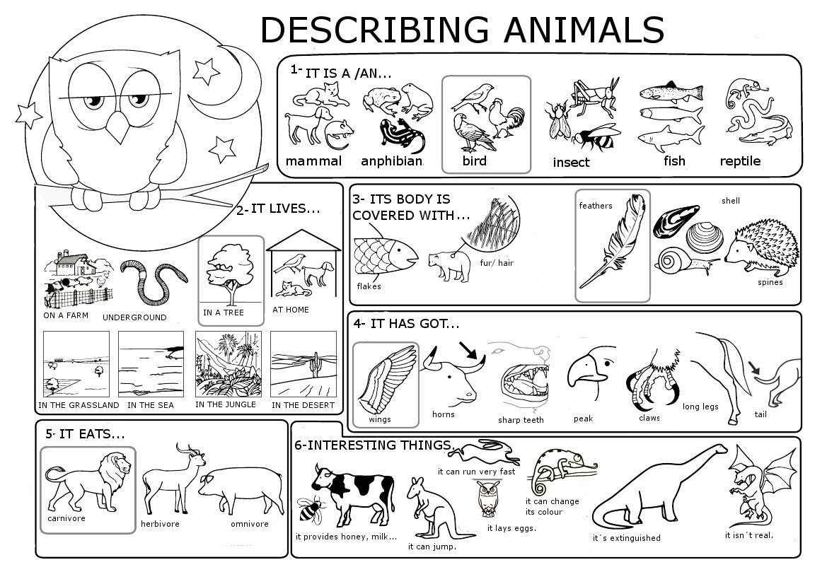 Describing An Animal