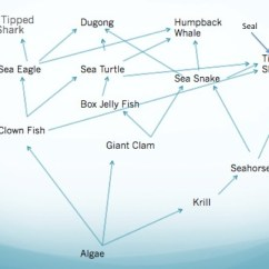 Coral Reef Food Chain Diagram Honda Gx240 Wiring Trophic Level Web