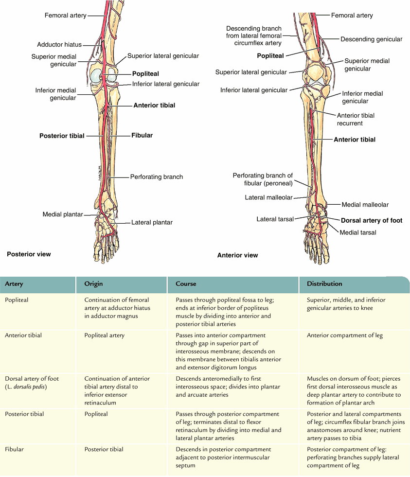 hight resolution of arteral distribution cs