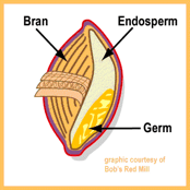 grain kernel diagram how to draw deployment in staruml grains lesson plan myplate unit the first activity 15 minutes is an introduction whole teacher shows image on over head projector of a