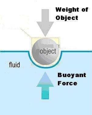 Archimedes Principle and Buoyancy  Physics of Diving