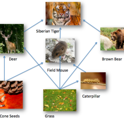 Taiga Food Web Diagram 3 Pickup Les Paul Wiring Tiger Pictures |