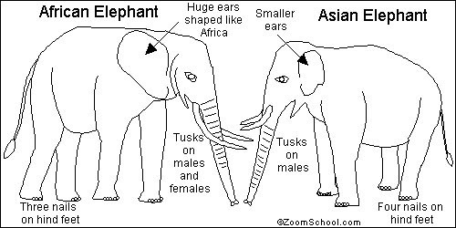african elephant food chain diagram 92 honda prelude stereo wiring trusted online of an diagrams click