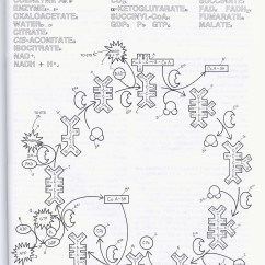 Glycolysis And Krebs Cycle Diagram 2004 Pontiac Grand Am Gt Wiring Sbi4uoptionaldiagramsandreadings Weatherstond