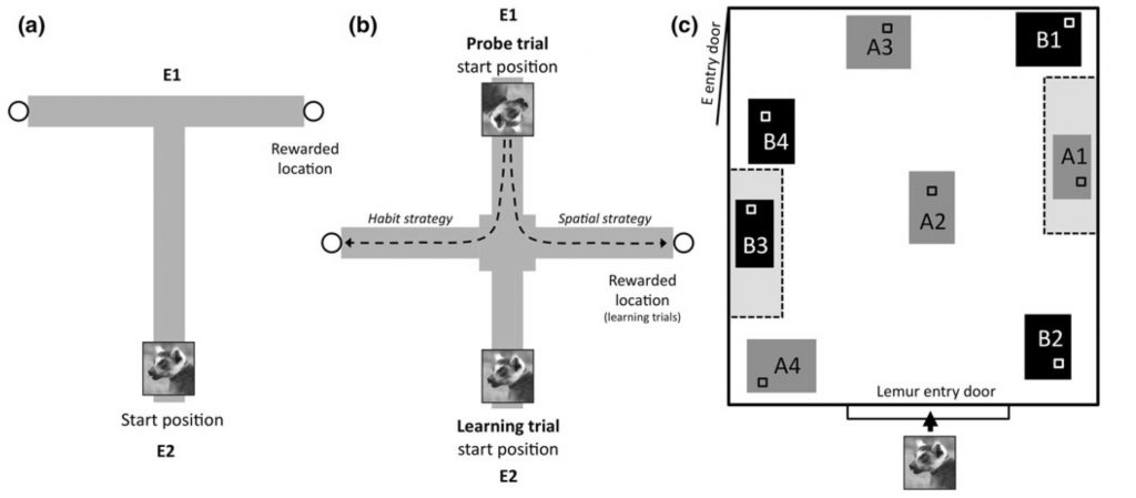 The ecology of spatial memory in four lemur species