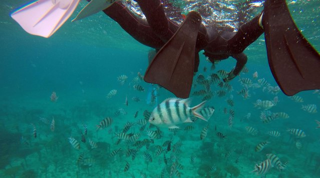 A snorkeler underwater among fish