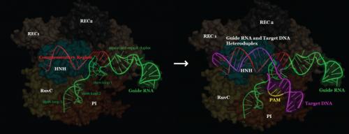target DNA binding overview