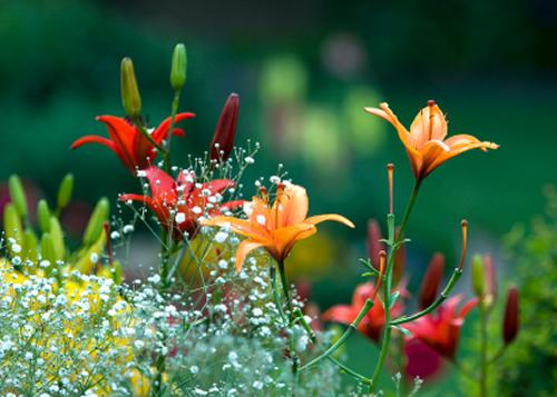 in of spring landscape maintenance