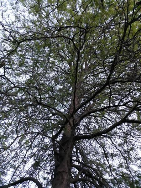 Arborele vieții-Radu Romina