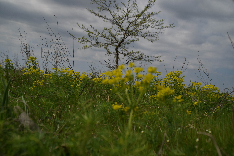 Copacul singuratic-Andrei Albert