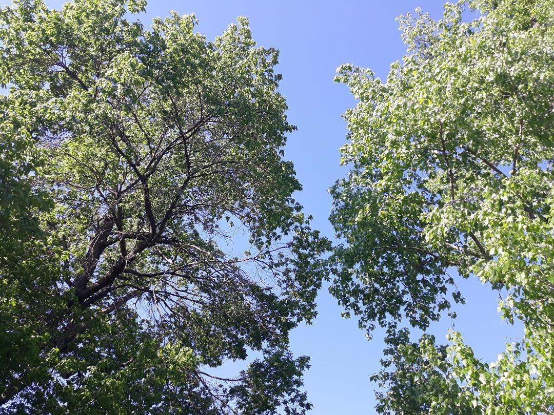 De vorbă sub cerul liber-Găinaru Ana Maria