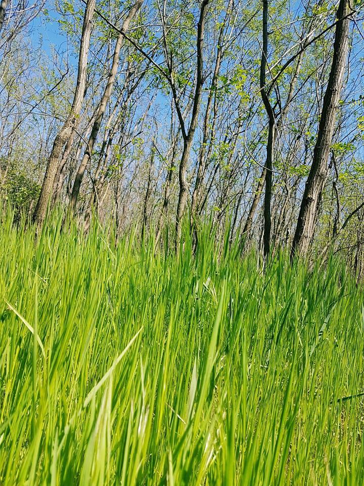 Firul crud de iarbă-Baciu Florentina