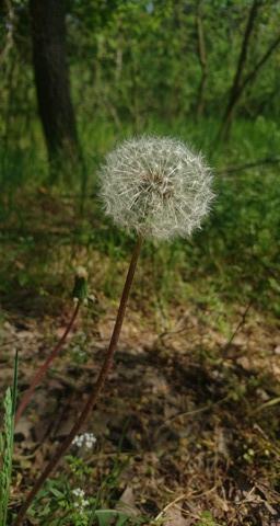 Floarea copilăriei-Marin Priscila