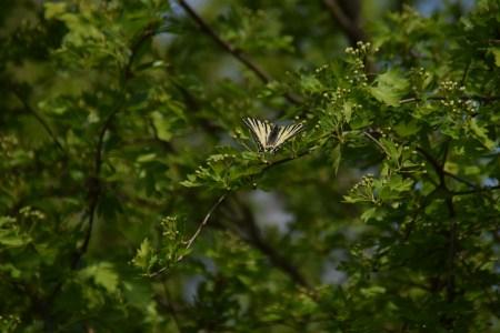 Zbor din floare în floare-Crișan Gabriel