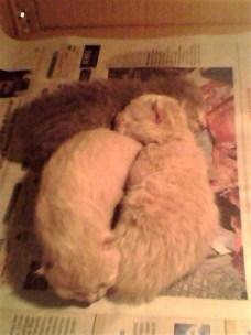 Jane-Nuar-Ari The Kitten Born in January