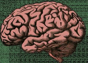 Human brain.  Image courtesy of Holdentrils (Pixabay).