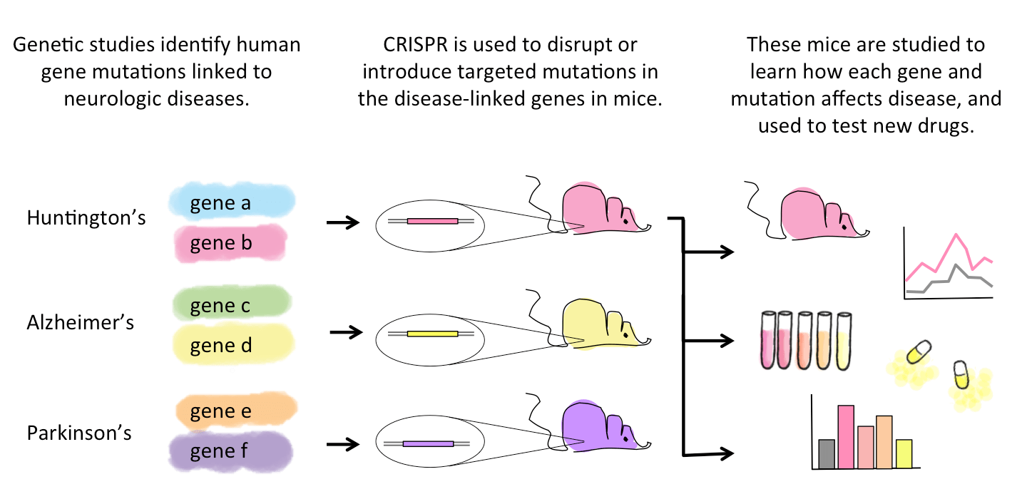 CRISPR in Neuroscience: How Precision Gene Editing May