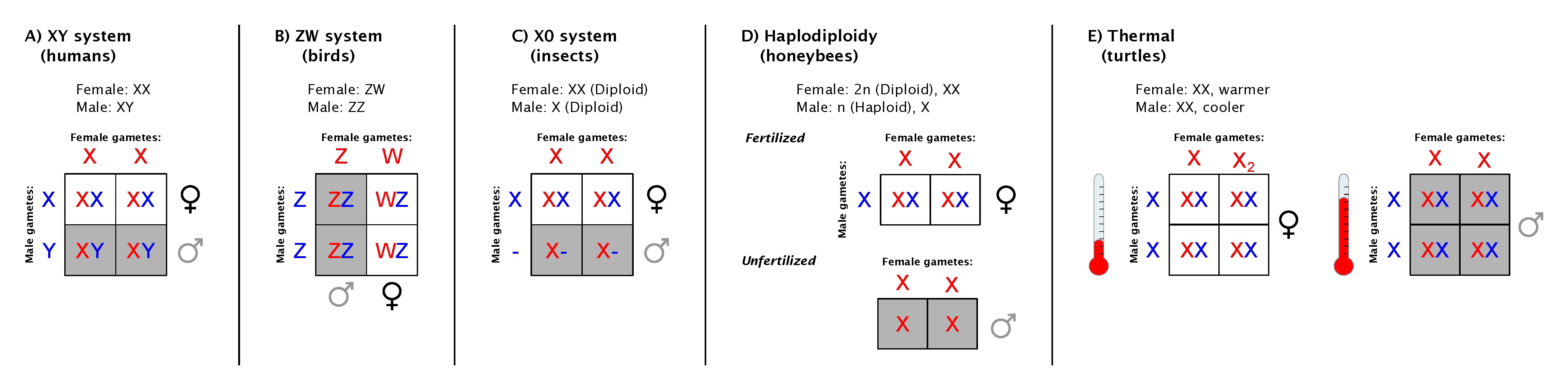 environmental sex determination in birds