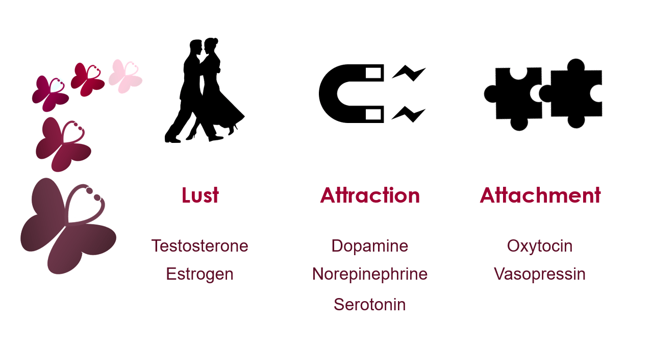 Love, Actually: The science behind lust, attraction, and