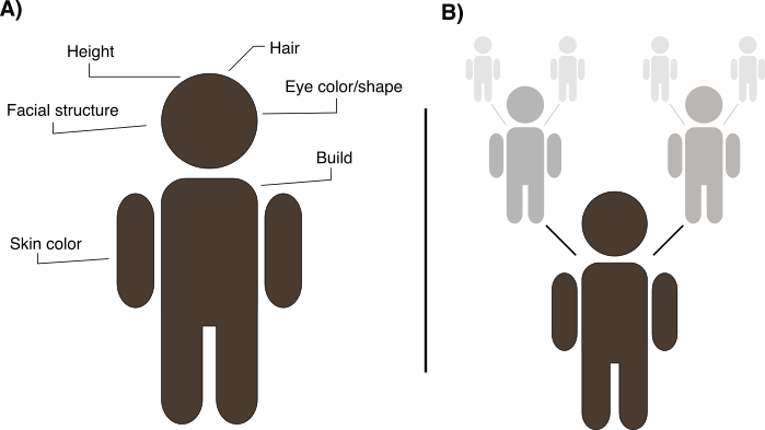 "Figure 3. Race versus ancestry. (A) The classification of people into different races is typically based on observable physical features, with skin color being the most prominently used characteristic. Racial classifications also draw upon non-biological characteristics such as culture, language, history, religion, and socioeconomic status. Thus, ""race"" is a term that lacks clear definition. (B) In contrast to race, ""ancestry"" emphasizes the geographical origins of one's ancestors (parents, grandparents, and beyond). Unlike ""race,"" the concept of ""ancestry"" does not focus on the static categorization of humans into groups, but rather on the process by which a person's history unfolded."
