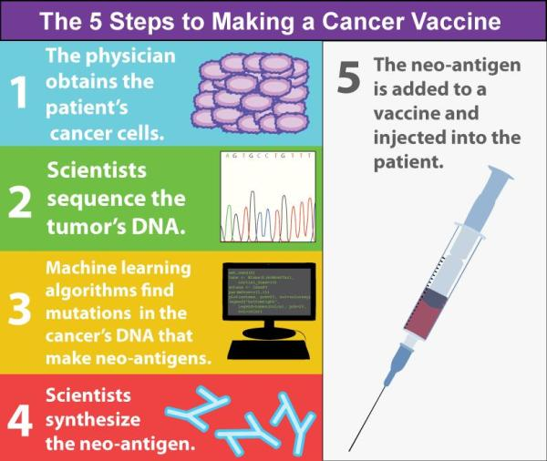 Figure 2: The personalized process behind cancer vaccines. The making of cancer vaccines involve DNA sequencing of the patient's tumor, prediction of putative neo-antigens, and synthesis of neo-antigen peptides (small, protein-like substances). Many neo-antigens can be pooled with adjuvants and injected into the patient.