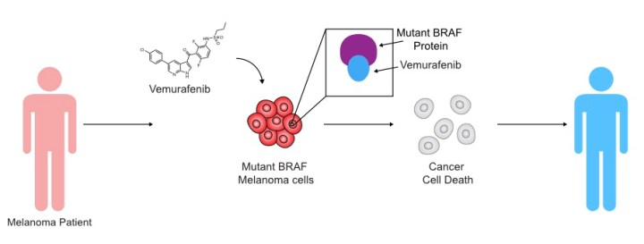 Figure 1: An example of a targeted therapy. Vemurafenib targets a mutant form of BRAF. When vemurafenib binds BRAF, growth and proliferation of the melanoma cells that harbor this mutant protein (roughly 60% of this type of melanoma) is halted, killing the cancer.