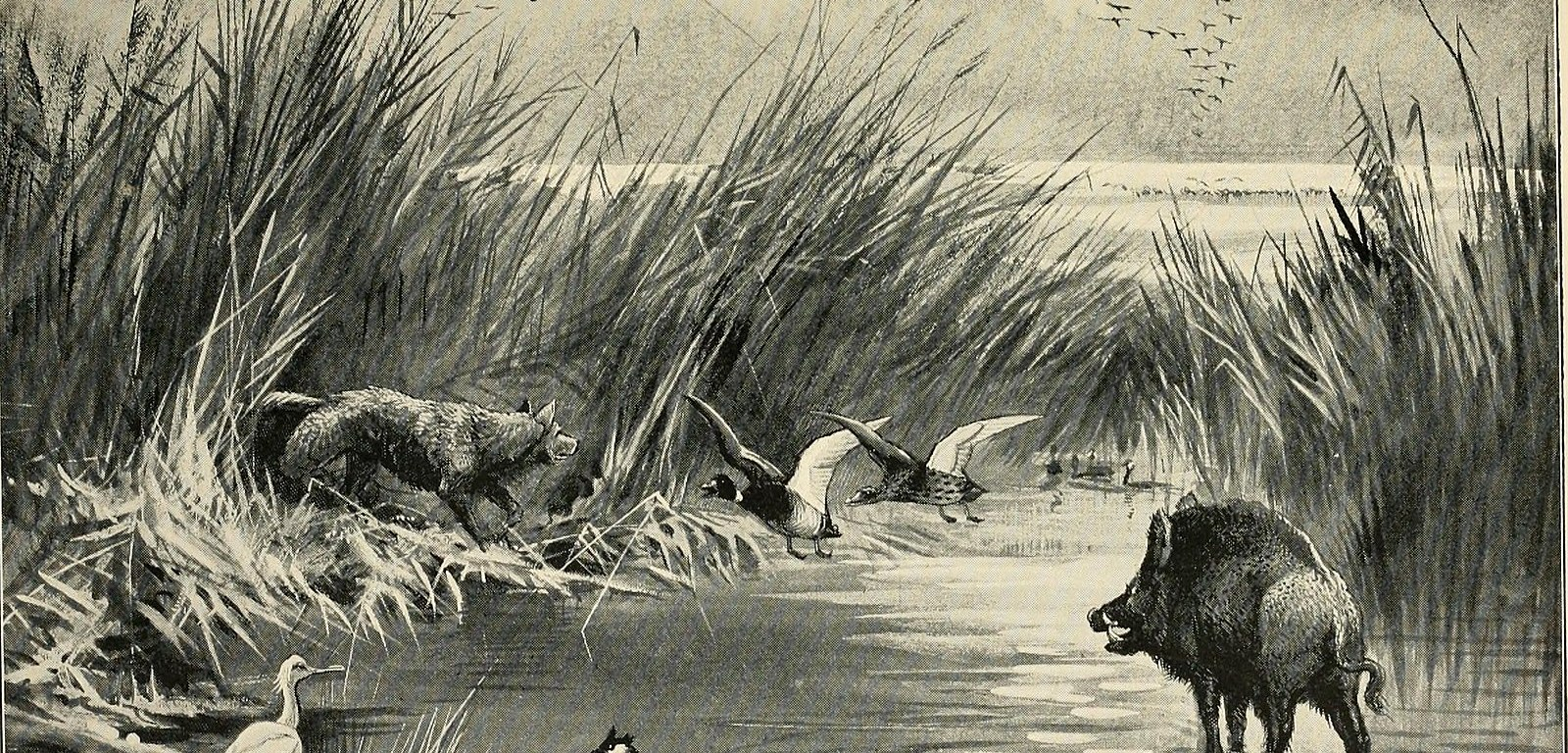Lost and Vanishing Birds being a record of remarkable extinct species