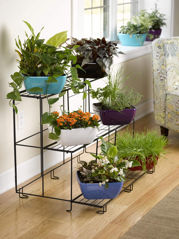 dish garden viva -watering