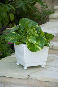 "Self Watering Rolling Planter 15"" in Three Colors ..."