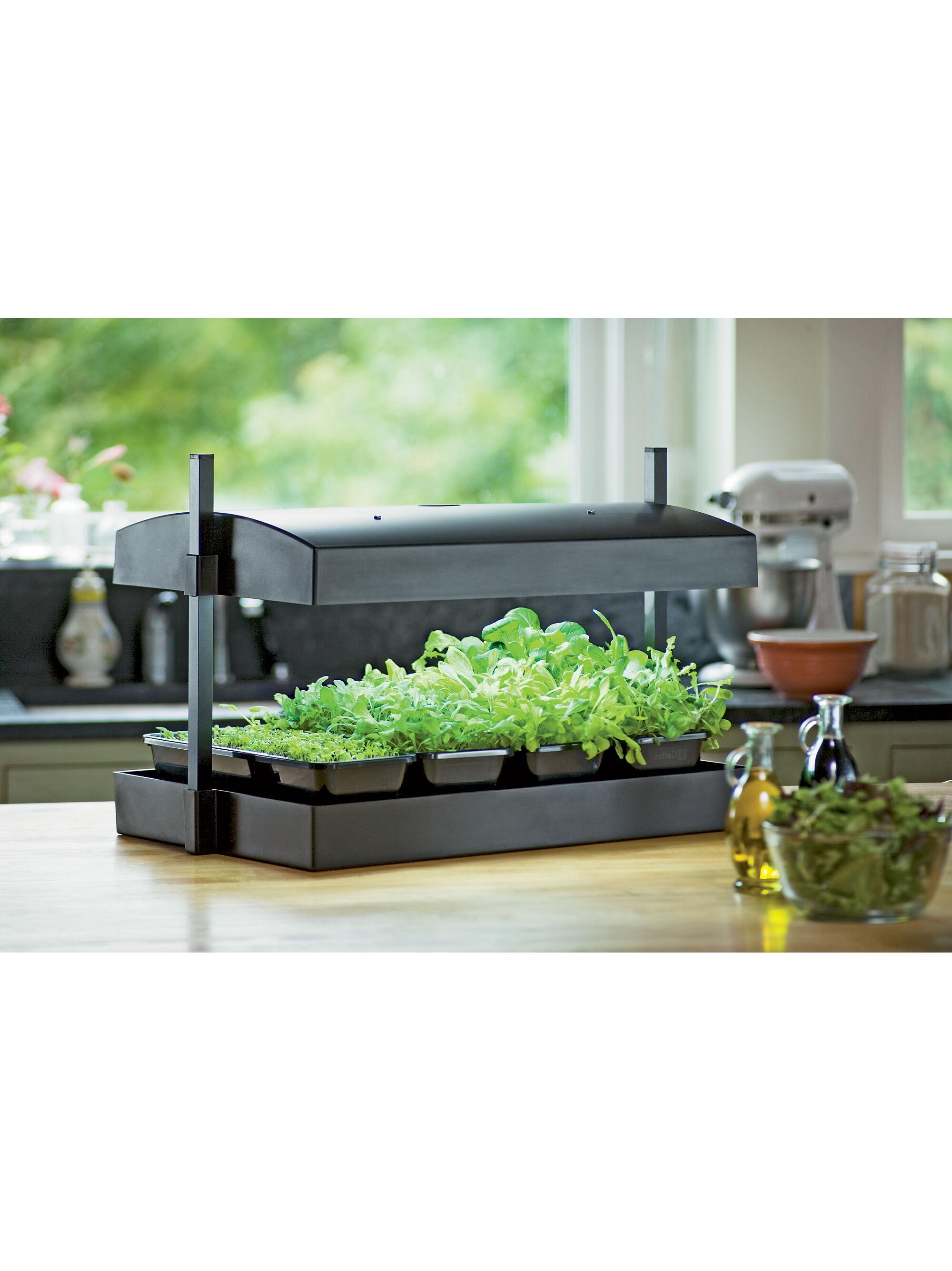 Indoor Herb Garden Kit  My Greens Light Garden  Gardeners Supply