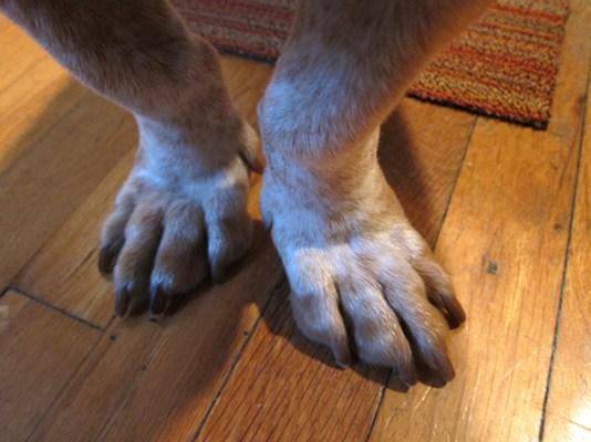 Tayter Feet