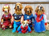 The 5 Best Halloween Large Dog Costume Ideas