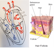 confronting hair loss