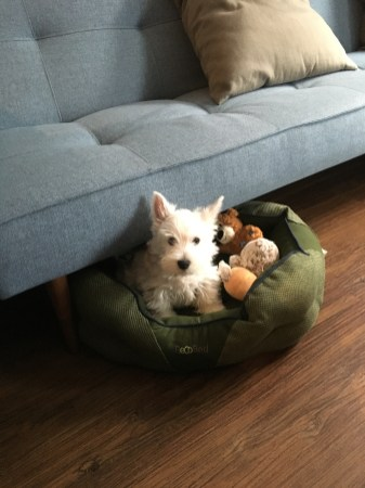 Hund im Körbchen