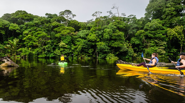 canales tortuguero en kayak