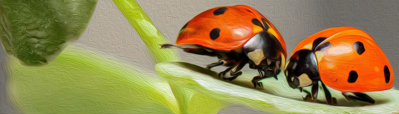 lady bug kiss
