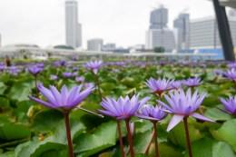 singapore 14th-7